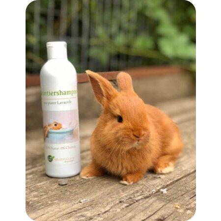Medizinisches Kaninchenshampoo | Bio | sanfte Fellpflege ohne Chemie & Seife | gegen Juckreiz | hypoallergen | unterstützt die Wundheilung | mit original marokkanischer Lavaerde | 250 ml